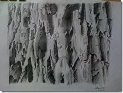 tree_bark_