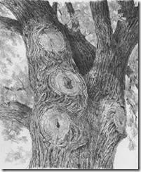 treebark3