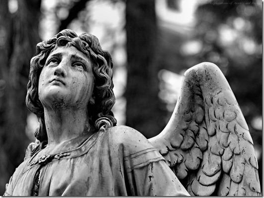 Angel_thumb.jpg