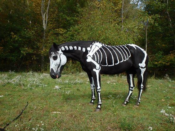 horse-dead