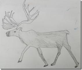 Reindeer 010
