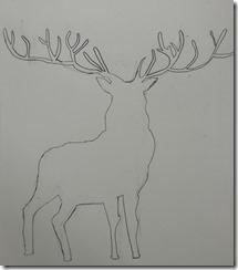 Reindeer 013