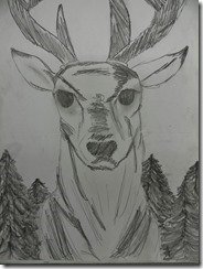 Reindeer 015