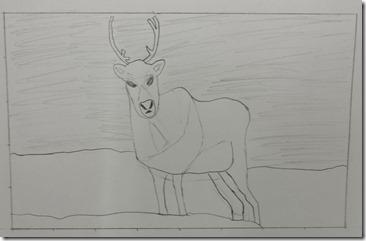 Reindeer 017