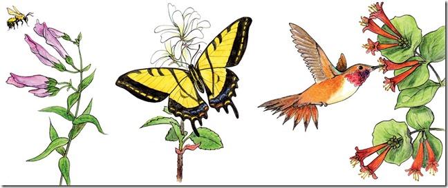 Pollinator-
