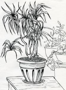 house plant 3