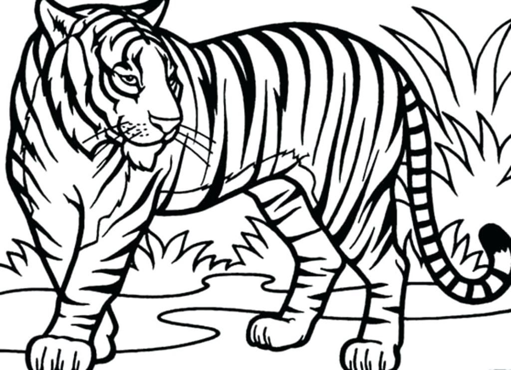 mck mr mck s art page History Teacher Resume outline of a tiger resume