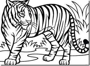 outline-of-a-tiger-resume